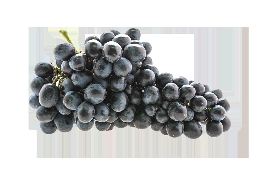 Uva nera San Colombano al Lambro Casa Valdemagna vino enoteca degustazioni